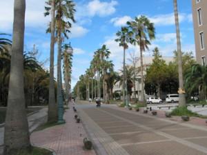鹿児島大学キャンパス-今見るとやはり南国っぽいですね